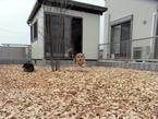 ウッドチップ施工例 埼玉県・個人邸